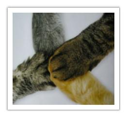 Katzenverein in Katzenverein